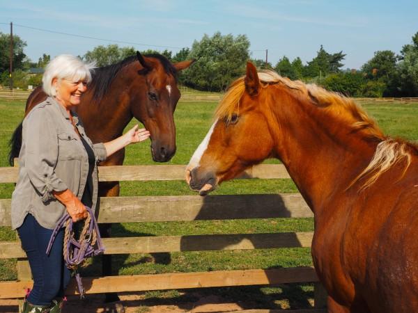 Fresh Fields Equine Retirement Home